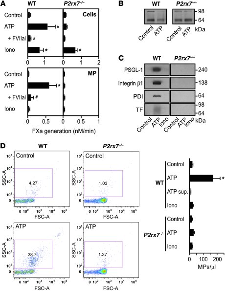 ATP activation of P2X7 receptor induces macrophage TF activation coupled...