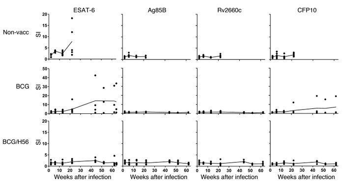 Antigen-specific T cell responses after high-dose M. tuberculosis infect...