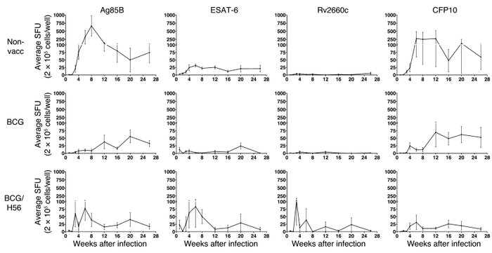 Antigen-specific IFN-γ elispot responses after low-dose M. tuberculosis ...