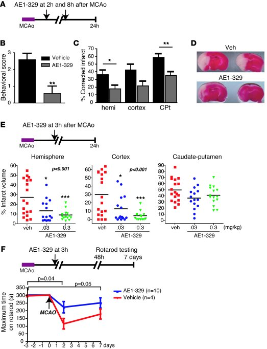 EP4 agonist administration after cerebral ischemia is protective. (A) 60...