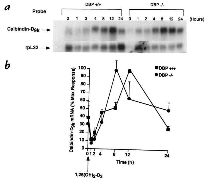 Accelerated activation of calbindin-D9K gene expression by 1,25(OH)2D in...