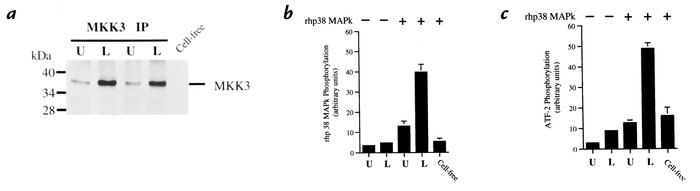 Coupled assay of MKK3 activation. Neutrophils were stimulated with LPS (...
