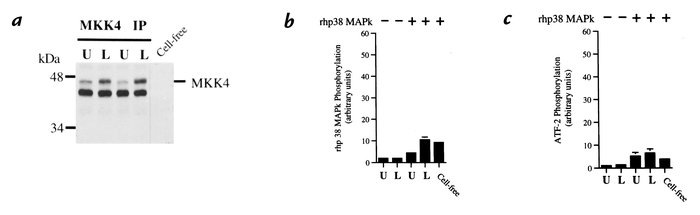 Coupled assay of MKK4 activation. Neutrophils were stimulated with LPS (...