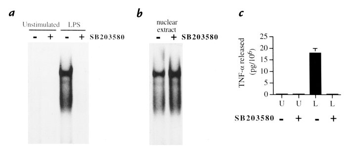 Inhibition of NF-κB activation by SB203580-induced inhibition of p38α MA...