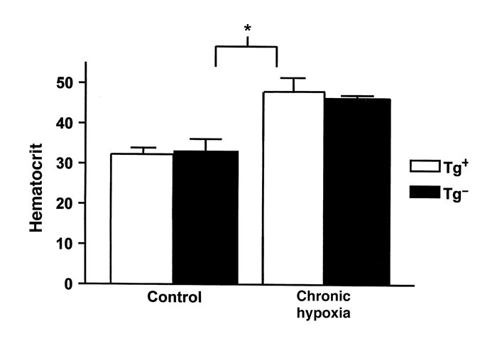 Hematocrits of animals at baseline and after hypobaric hypoxia exposure....