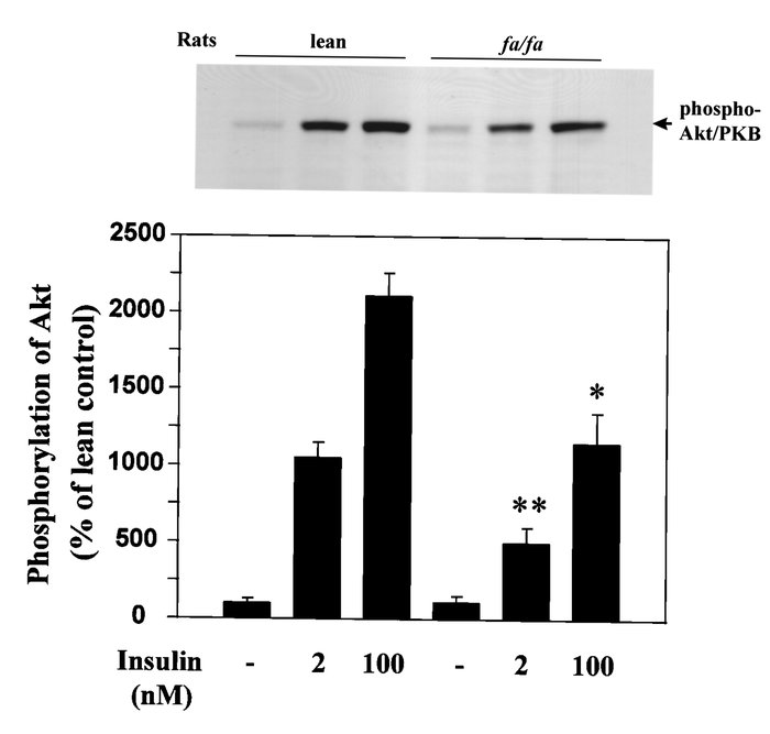 Insulin-stimulated serine phosphorylation of Akt in isolated microvessel...