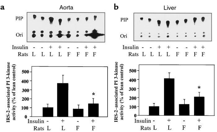 IRS-2–associated PI 3-kinase activities in the aorta and liver after eug...