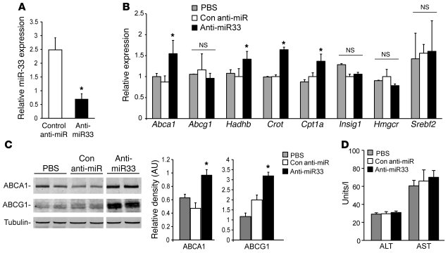 Anti-miR33 treatment reduces miR-33 expression in the liver and causes d...