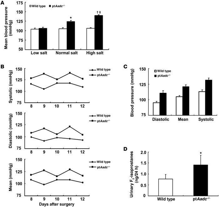 ptAadc–/– mice developed salt-sensitive hypertension.     (A) MBP was si...