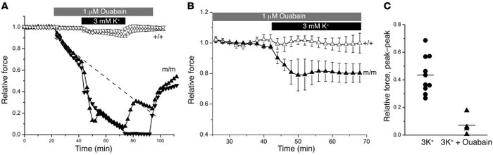 Recovery from weakness was ouabain sensitive. In vitro contraction respo...