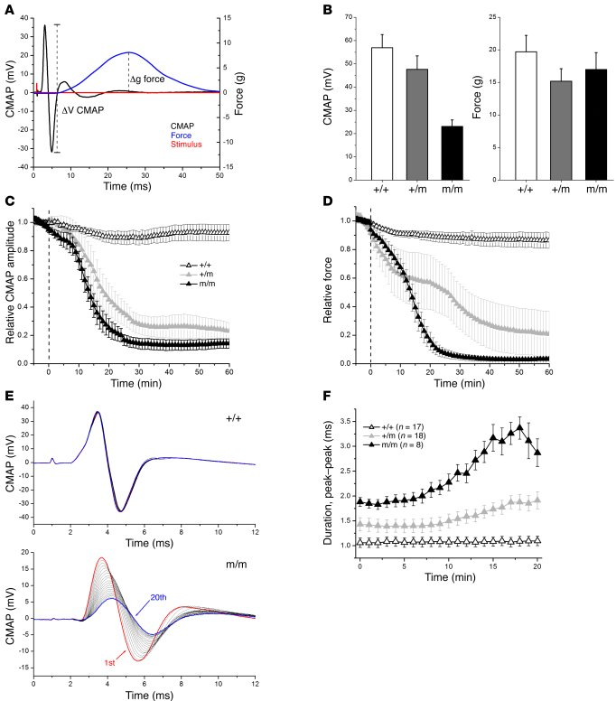 In vivo reduction of muscle excitability and force from glucose plus ins...