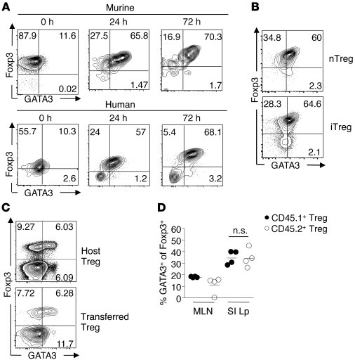 TCR activation triggers GATA3 expression in mouse and human Tregs. (A) E...