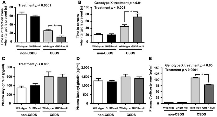 Intact acyl-ghrelin signaling via GHSRs minimizes CSDS-associated, depre...