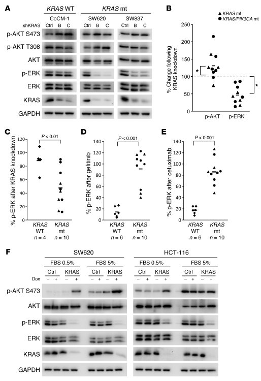 KRAS is required for MEK/ERK signaling in KRAS mutated colorectal cancer...