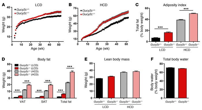 Gucy2c–/– mice exhibit increased body weight, reflecting excess adiposi...