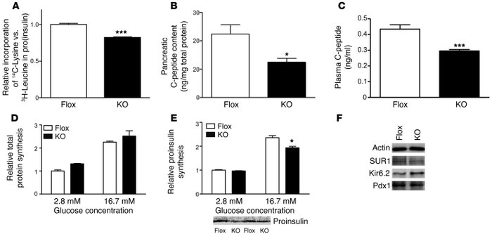 Aberrant insulin synthesis in the pancreatic β cells of β cell KO mice. ...
