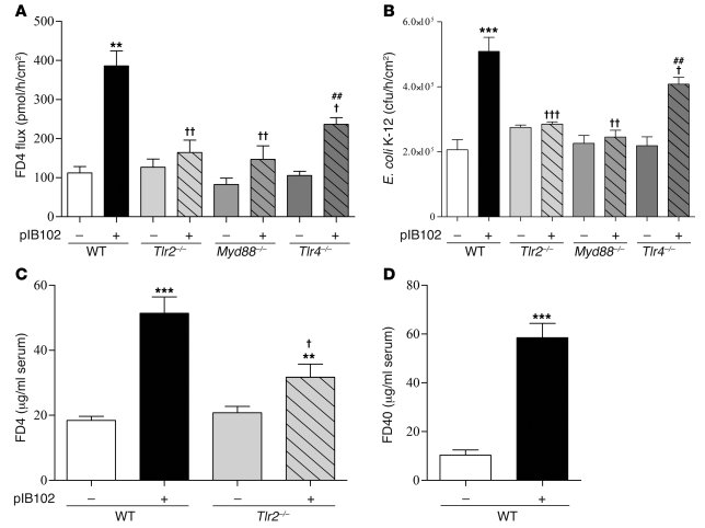 TLR2 is required for Y. pseudotuberculosis alteration of PP barrier func...