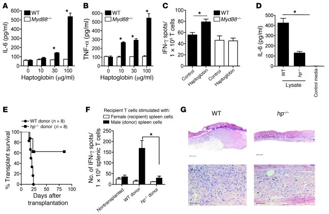 Haptoglobin activates DCs via MyD88, and donor haptoglobin increases the...