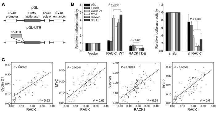 Ribosomal RACK1 preferentially promotes the translation of potent growth...