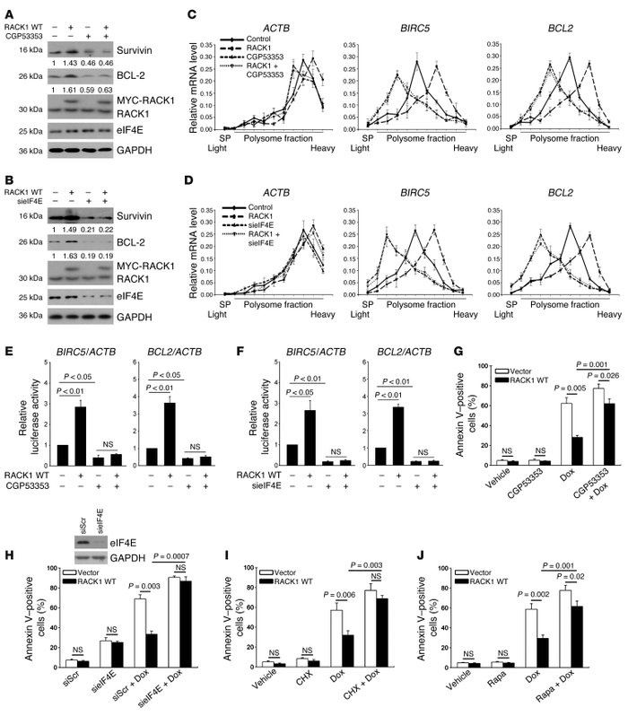 RACK1 promotes the in vitro chemotherapy resistance of HCC in a PKCβII- ...