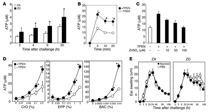 Zn deficiency increases ATP release by keratinocytes in response to irri...