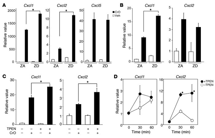 Zn deficiency increases Cxcl1 and Cxcl2 gene expression in keratinocytes...