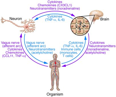 Innate immune receptors as sensors of intraneuronal distress. Neurons ex...