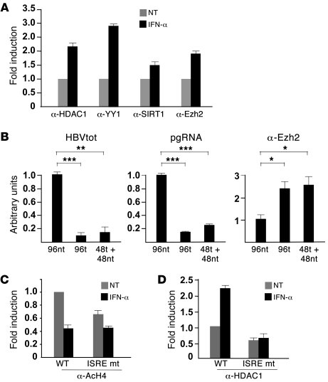 IFN-α modulates the epigenetic control of cccDNA function by affecting t...