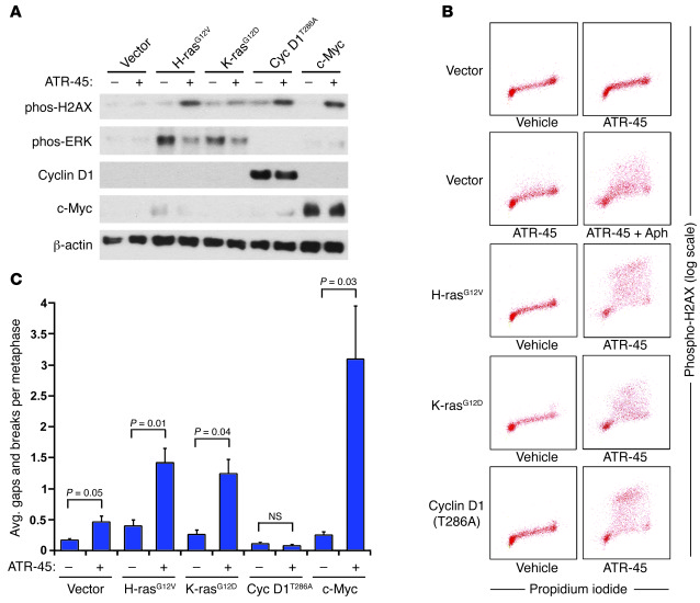 ATR inhibition synergizes with H-rasG12V, K-rasG12D, and c-Myc overexpre...