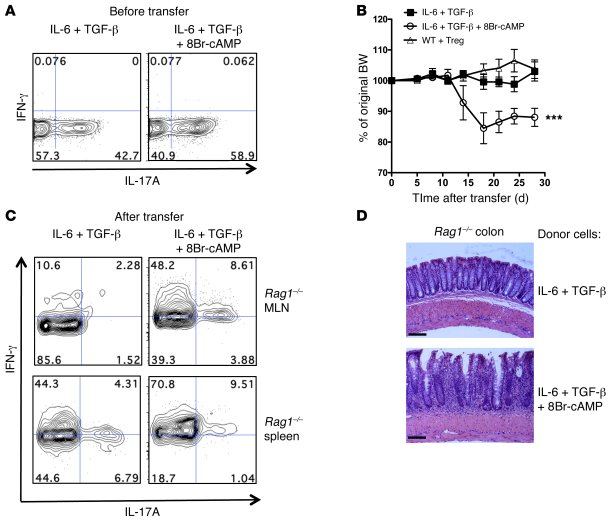 cAMP enhances the colitogenicity of in vitro differentiated Th17 cells. ...