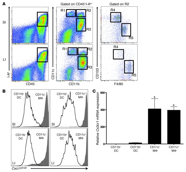 Murine intestinal LP macrophages express CX3CR1. (A) Flow cytometry of s...