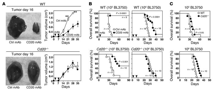 Endogenous B cells inhibit lymphoma depletion by CD20 mAbs in vivo. (A) ...