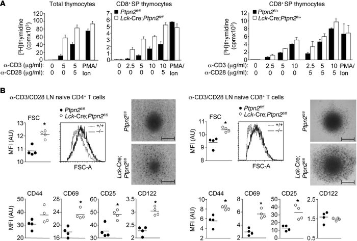 Ptpn2 deletion enhances thymocyte proliferation and T cell activation in...