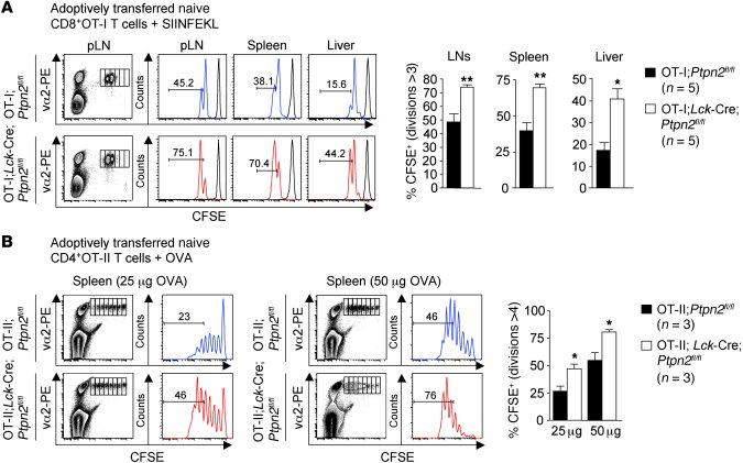 Ptpn2 deletion enhances T cell proliferation in vivo. (A) FACS-purified ...
