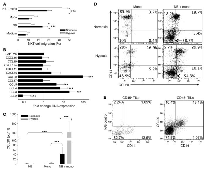 Contact with NB cells and hypoxia synergistically induce CCL20 in human ...