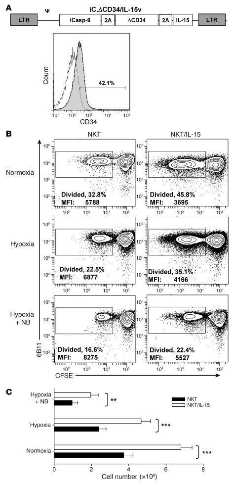 Transgenic expression of IL-15 in NKT cells protects them from hypoxia. ...
