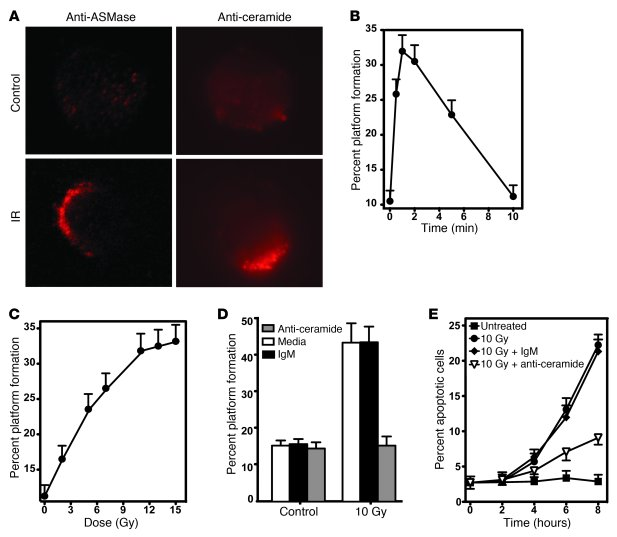 CRPs regulate ionizing radiation–induced apoptosis of BAECs. (A) Cells w...