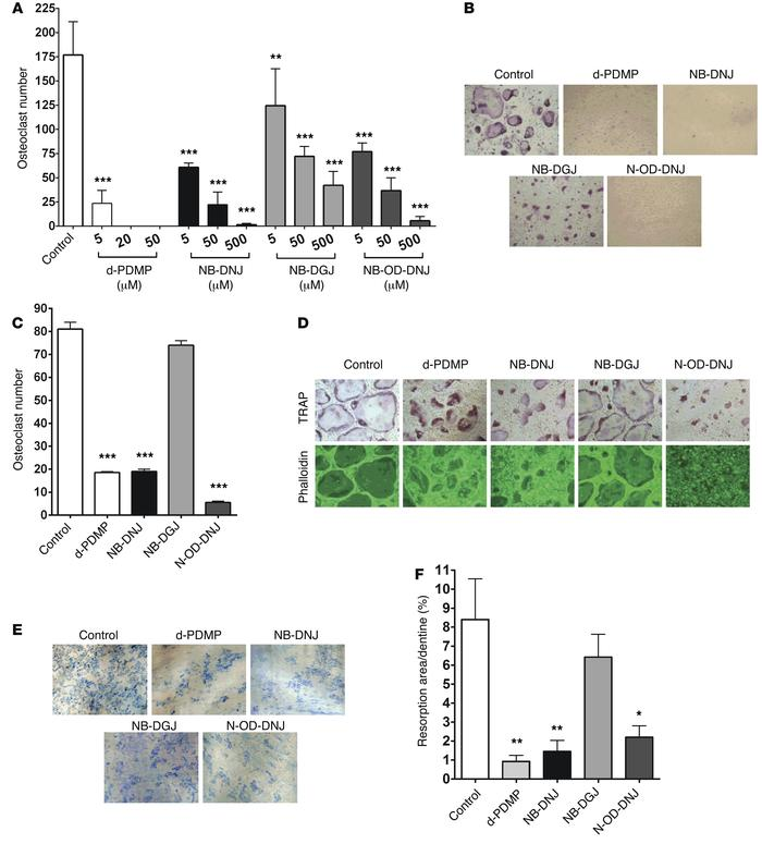 GSL inhibitors inhibit osteoclastogenesis and bone resorption in vitro. ...