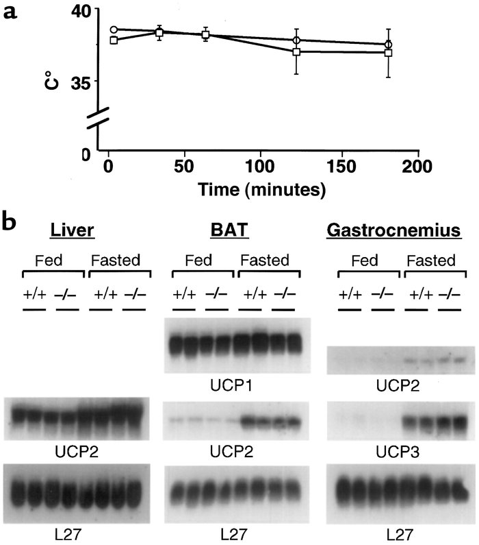 JCI - Peroxisome proliferator–activated receptor α mediates