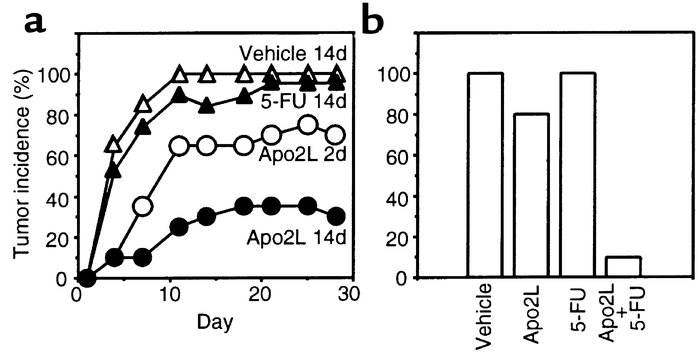 Effect of Apo2L on tumor formation. (a) Nude mice (10 per group) were in...
