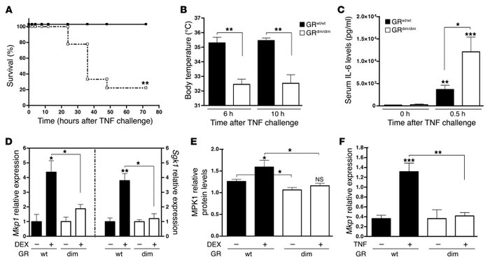 GRdim/dim mice are hypersensitive to TNF lethality and cannot induce MKP...