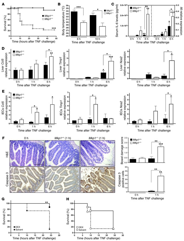 Mkp1–/– mice are hypersensitive to TNF-induced lethality.   (A and B) S...
