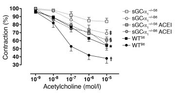 The strain-specific hypertension in sGCα1–/– mice is associated with gre...