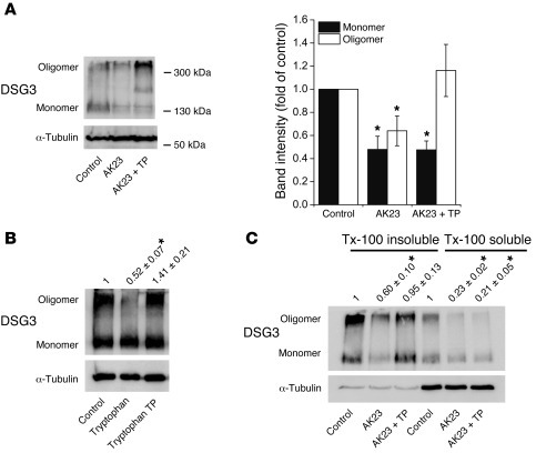 TP promoted oligomerization of desmosomal DSG3 on the cell surface. (A) ...