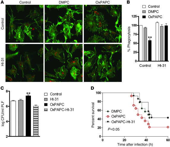 OxPL-induced inhibition of phagocytosis requires anchoring of PKA in viv...