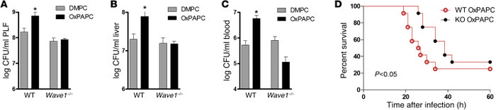 Chimeric Wave1-KO mice are rendered unresponsive to OxPL.   (A–D) WT mic...