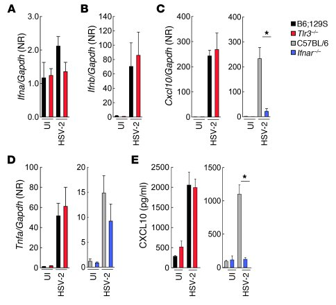 Expression of cytokines in medulla spinalis is unaltered in HSV-2–infect...