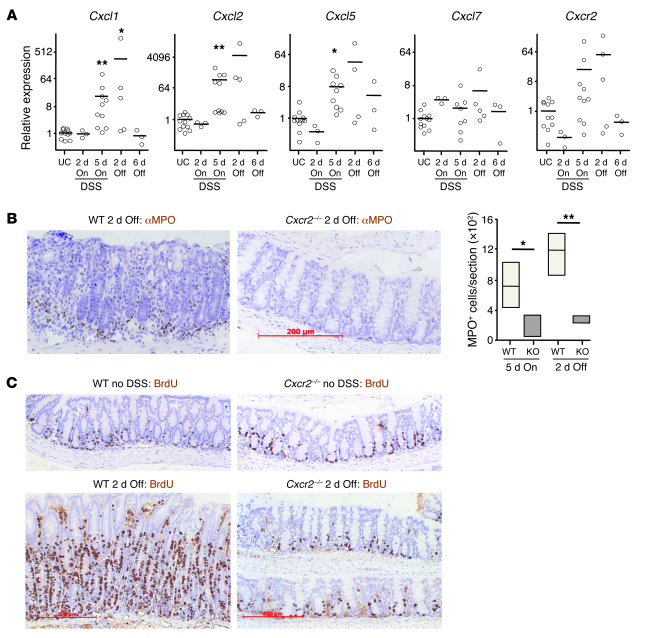 Cxcr2 deficiency protects against intestinal inflammation induced by 2%...