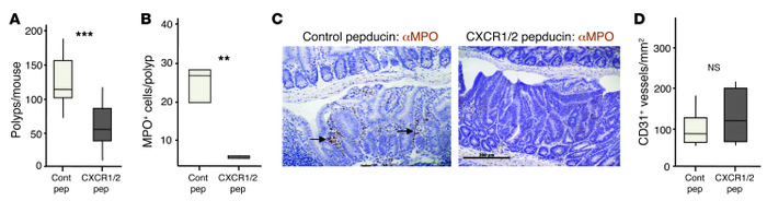 CXCR2 inhibition suppresses spontaneous formation of benign cancers in A...