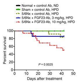 Survival plot demonstrates higher mortality in the high-dose FGF23-Ab gr...